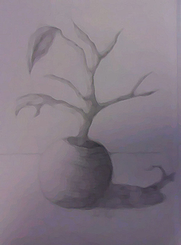 Dying Plant
