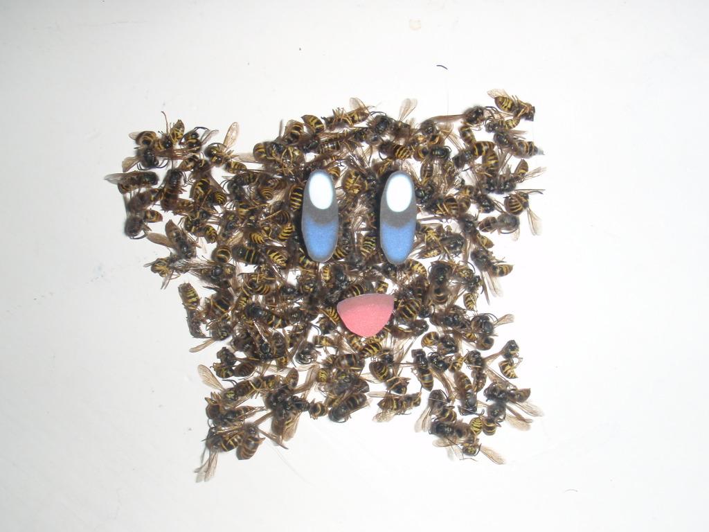 Wasp Kirby