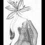 hand and flower by johnbanana