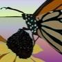 butterfly2 by ryan-pujado11