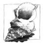 Seashell study by unfrozenMONKEY
