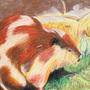 Beaver by itsKris