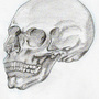 skull by merriman766