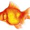 GoldSwimmer