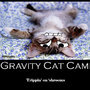 Gravity Cat Came by ResidentEddy