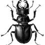 Stag Beetle by MatthewSmith