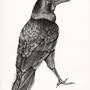 Raven by Sabeku