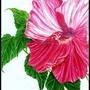 Pink Flower by XxCrimsonMoonxX