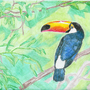 The Toucan by BlackLabelBobbie