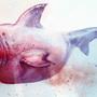 shark anatomy fail by okoo