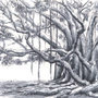 Tree by AvengedSoul