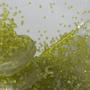 Lemon splash by Carck