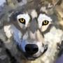 Wolf artz by wanton360