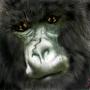 Gorilla by banegame