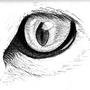 Kitty..... eye by Kinsei
