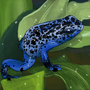 Poison Ink Frog by davidstanley