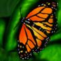 Butterfly Wacom Test by Leeon09