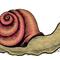 Safe Sex Snail