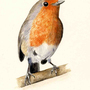 Robin by TinyStuffz