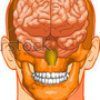 Medical Head by widecollar