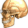 Medical Skull by widecollar
