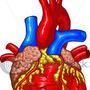 Human Heart by widecollar