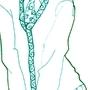 Patterny Leggings by MaxxieReed