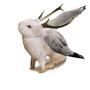 bunny rabit by aba1
