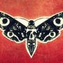 Moth by GOSTEONER