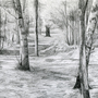 Woods by itsKris
