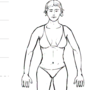 Female Anatomy by thies