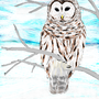 Owl in a Winter Breeze by Lugen