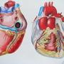 The Human Heart by ReneeYV