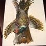 Ringed Necked Pheasant by daigonite