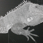Iguana Scratchboard by Mariowned