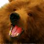 Bear by blochead