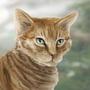Ginger Feline by Louise-Goalby