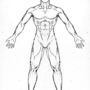 Male Anatomy Front Reference by Blud-Shot