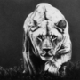 The Lioness by Xenzo