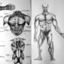 Muscle Studies by CoolDrMoney