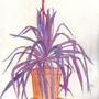 Purple Yucca by Haroshi