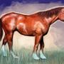 Cavalo by BinaryDood