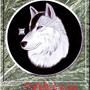 Wolf by bonkey666