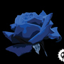 Blue rose on vectors by MJIB