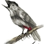 Grey Catbird by daigonite
