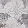 Plants by drakena