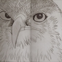 Eagle sketch by TheParodyAnimator