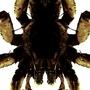 Wolf Spider by 00Nick00