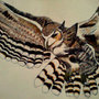 Great Horned Owl by ittykittycat