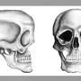 Skulls by Spotsifier